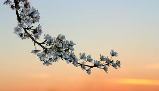 flowers-1265719_640