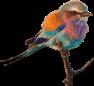 bird-1299232_640