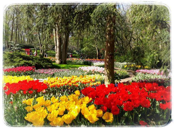 rood en geel bomen